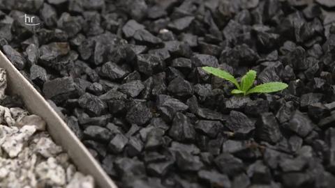 Schottergärten – wie die Klimasünden jetzt renaturiert werden