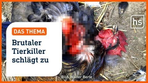 Warum Menschen Tiere quälen und töten. I hessenschau DAS THEMA