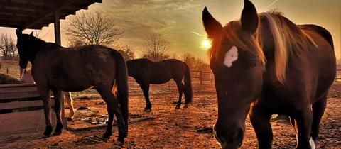 Sonnenaufgang an der Pferdekoppel in Gründau-Rothenbergen. Vielen Dank an hessenschau.de-Nutzer Günther Appich. Haben Sie auch ein außergewöhnliches Bild aus Hessen? Dann schicken Sie uns Ihr Foto – wir freuen uns über Ihre Momentaufnahme.