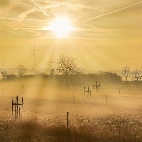 Frühnebel in goldenem Sonnenlicht