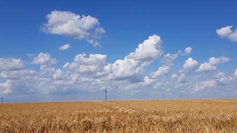 Blauer Himmel übr Gerstenfeldern