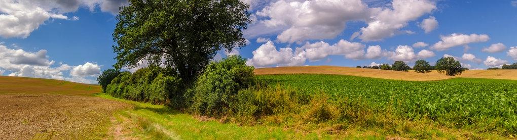 Felder, Hügel, Sommerhimmel