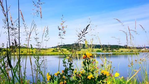 Blumen am Seeufer