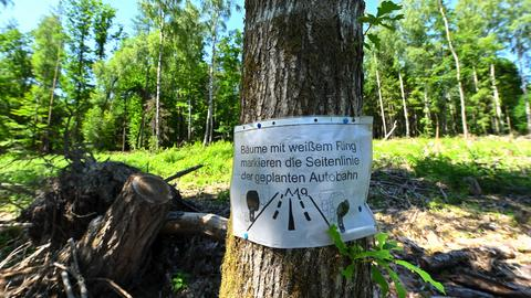 Schwalmstadt: Ein kopiertes Blatt weist im Dannenröder Forst auf weiß markierte Bäume hin, die den Trassenverlauf darstellen sollen.