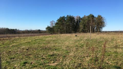 Diese Fläche südlich von Stadtallendorf war früher ein Acker. In ein paar Jahren soll sie ein Wald sein.