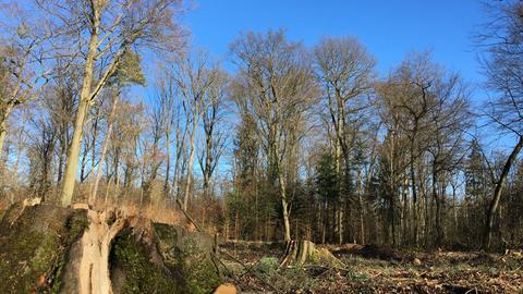 Blick in aufgewerteten Wald.