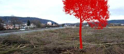 abholzung baum