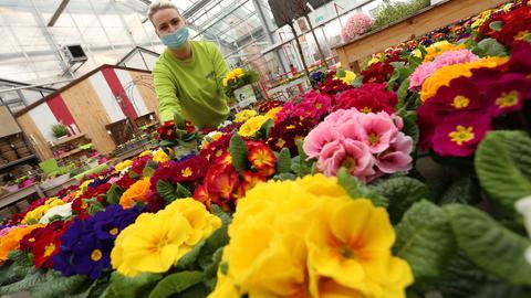 Auch Gartenmärkte dürfen ab Montag (8. März) in Hessen wieder öffnen.