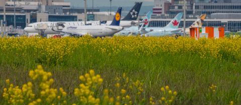 Blühende Sträucher am Frankfurter Flughafen.