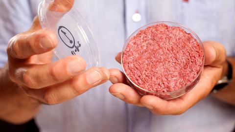 Forscher zeigt Hackfleisch in Petrischale