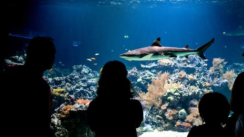 Ein Hai in einem Aquarium.