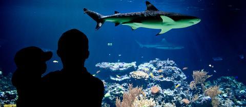 shark city gr tes hai aquarium europas soll in pfungstadt entstehen. Black Bedroom Furniture Sets. Home Design Ideas