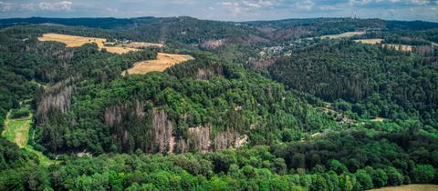 Wald bei Heidenrod-Wisper