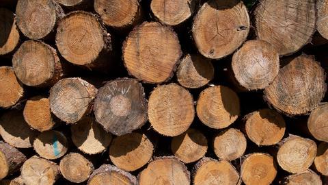 Baumstämme liegen gestapelt zum Abtransport bereit