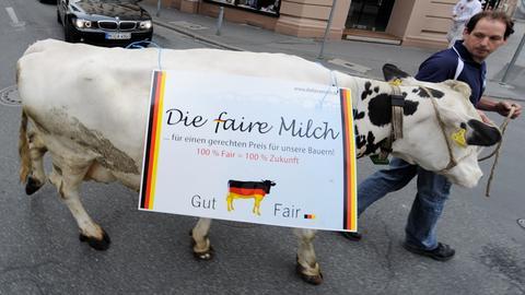 Protest: Milchkuh vor dem Landtag