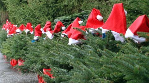 Weihnachtsbaum Trends