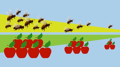 Wenige Wildbienen, viele Honigbienen