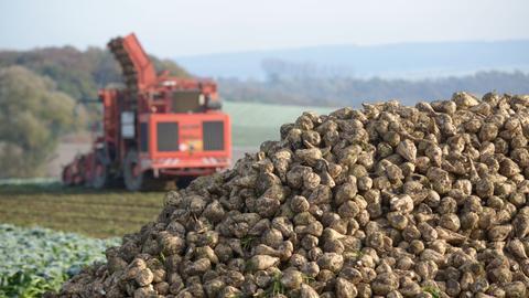 Ein Zuckerrübenroder arbeitet auf einem Feld in Dissen (Schwalm-Eder-Kreis).